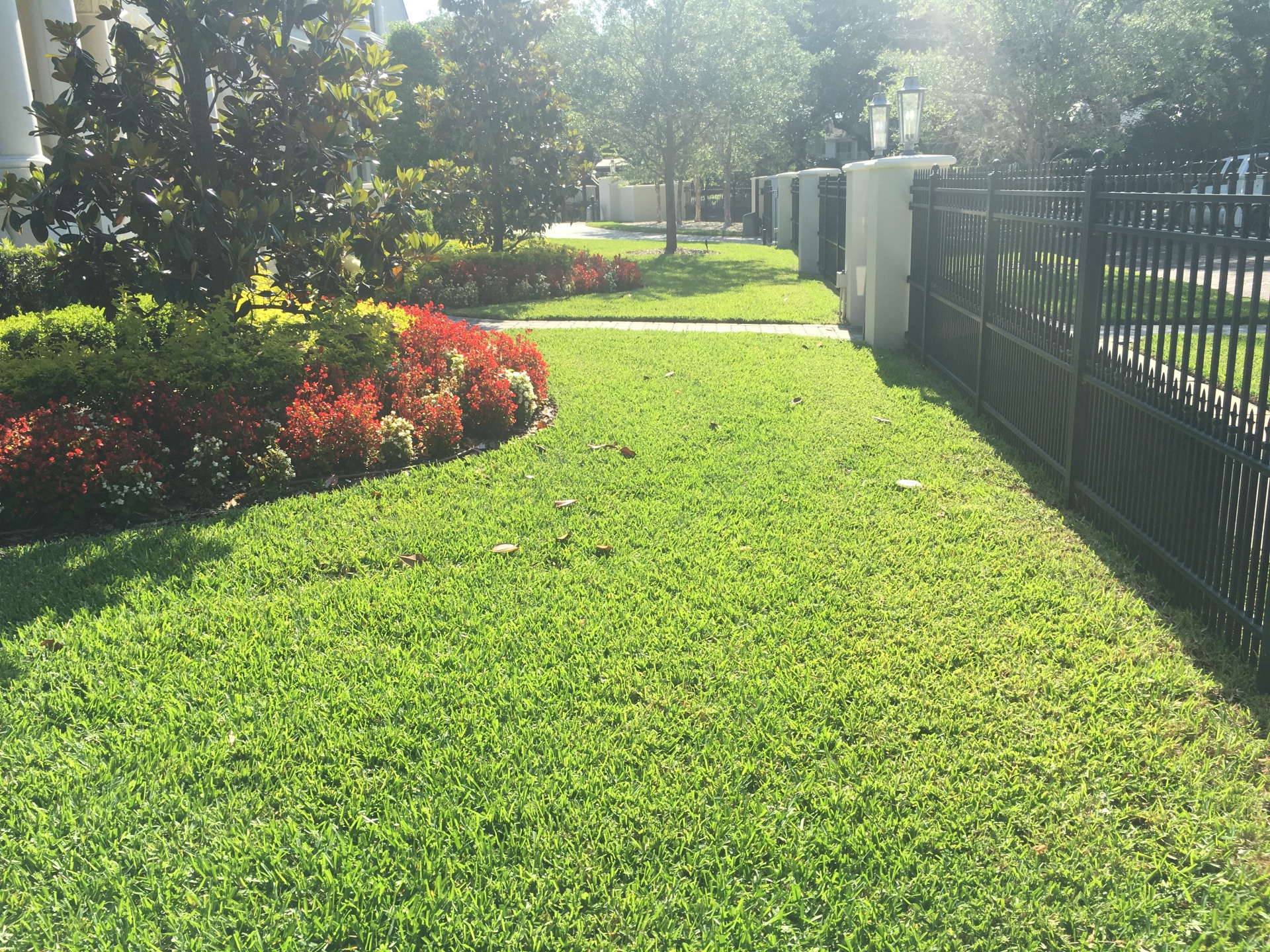 Tips for having a thick lawn